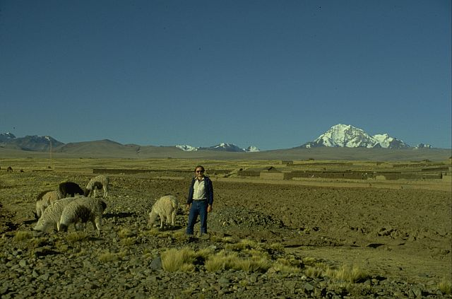 Cavorting with llamas on the Altiplano